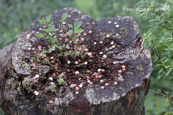 Wish Tree Trunk, Juneau, AK