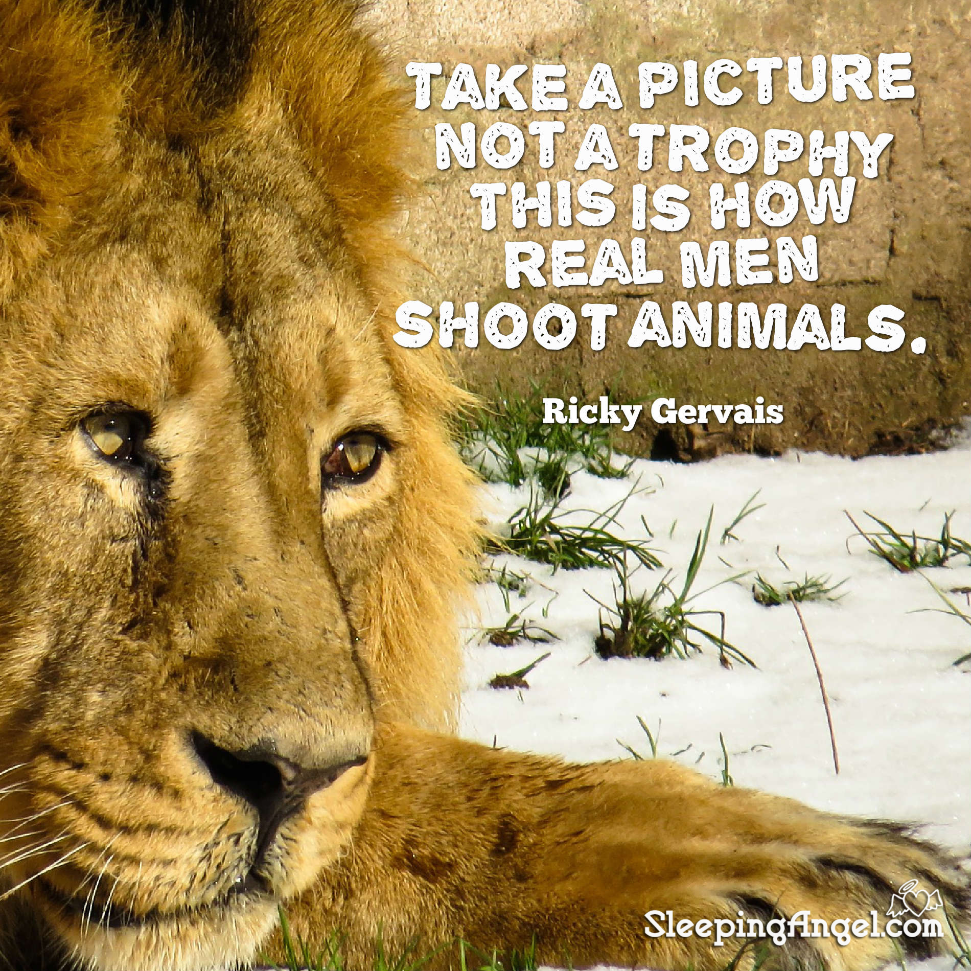 Take a Picture, not a Trophy Quote