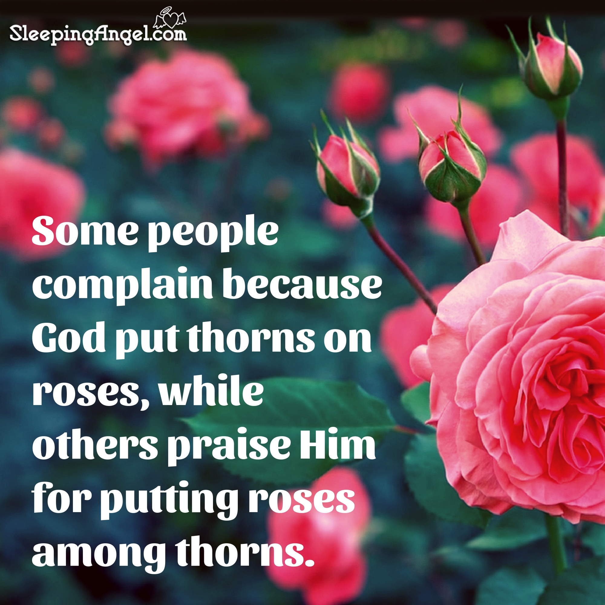 roses among thorns quote sleeping angel