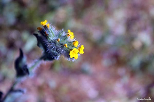 New Photos on Flickr/Pexels