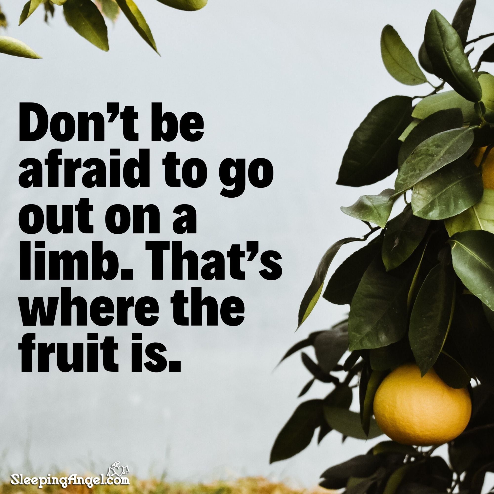 Go Out On A Limb Quote