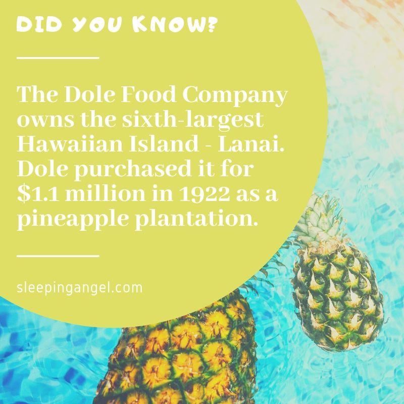 DYK? Pineapple Plantation