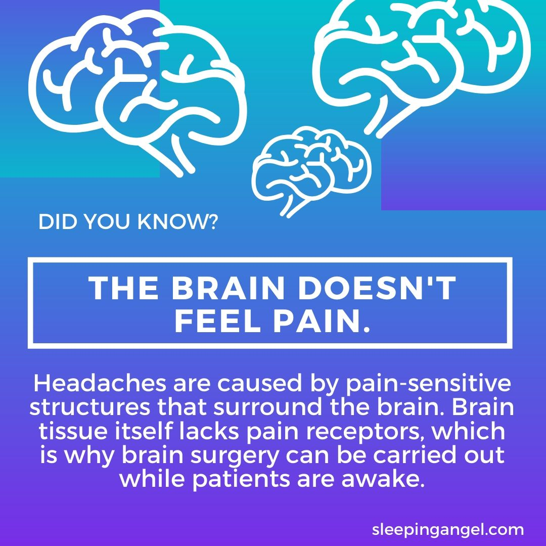 Did You Know? Brain Facts