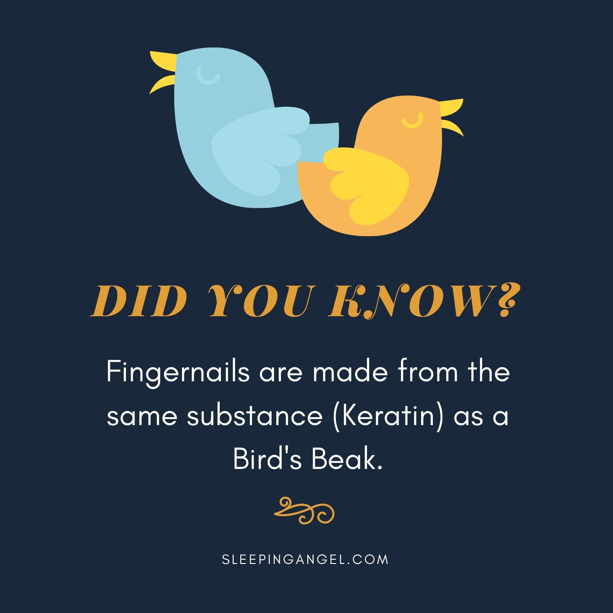 Did You Know? Keratin